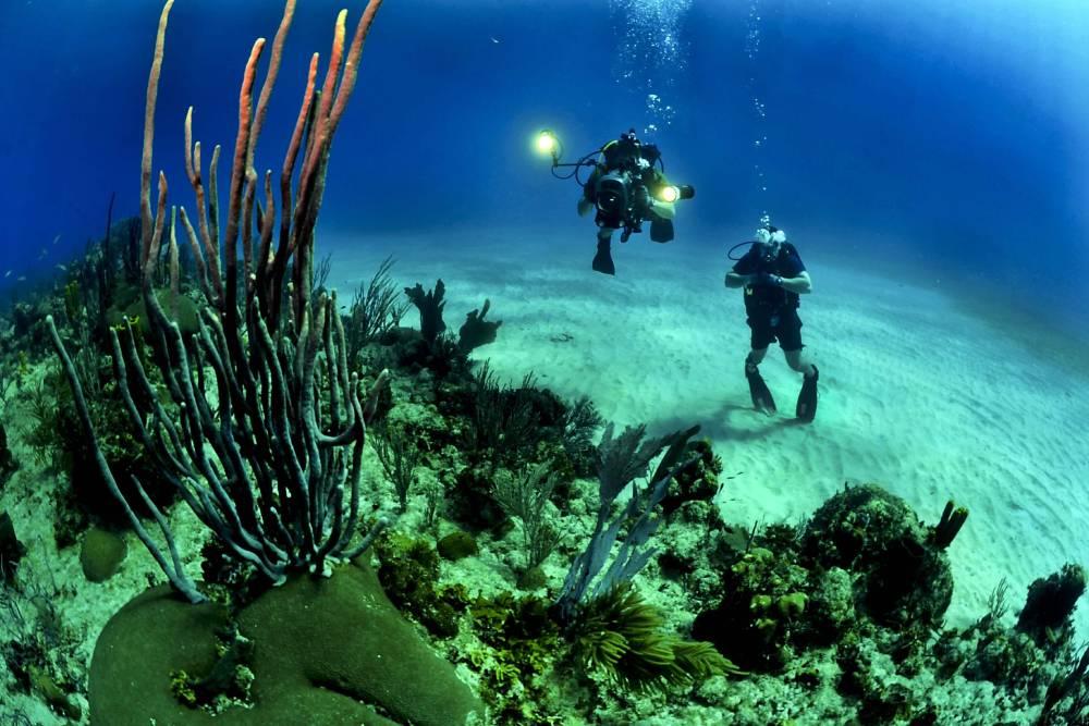 slider image - diver